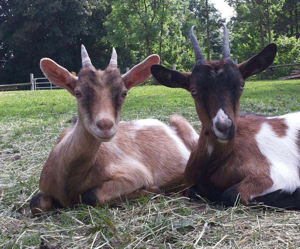 Maja (links ) und Tami (rechts)
